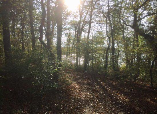 Wusterhausen/Dose - Waldspaziergang